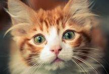 cats (=ↀωↀ=)