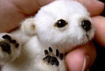 Fur Balls = Cuteness!