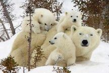 Beautiful Animals / Love love love for animals!! Beautiful. And Fluffy. / by Miss Maddy Hill