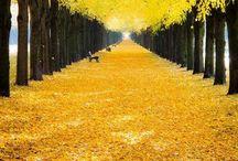 yellow january / my yellow january...things that make me happy