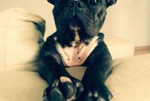 Igual o Bordi! / French Bulldog