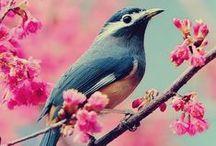 °Birdy° / Cutie singers, the rocks of trees: birds.