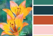 Colors / COLOR