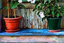 garden / by shea marie