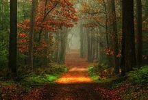 Autumn Love / by Leanne Thiessen