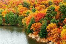 Fall Mood & Colors / Fall colors, autumn colors, fall foliage, fall leaves, the most beautiful fall scenes, trees, foliage, pumkins