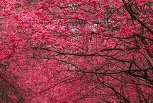 Spring / by SUZANNE KNIGHTEN