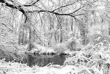 Winter / by SUZANNE KNIGHTEN