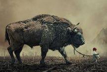 Photo--Animals/Birds / by jesu kiran