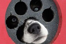 Peek-A-Boo, I See You