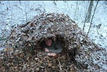 Real Survival / Wilderness survival skills using the basics.