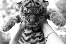 Adorable Animals / The most awe-dorable critters out there.