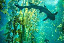 Underwater World / Visit the underwater world and its many amazing animals.