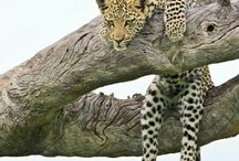 Crazy About Cats / Big cats, small cats, cats who play in trees.