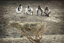 Ababda, Bisharin... Beja People, Red Sea