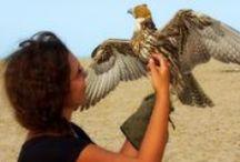 Falconry <3