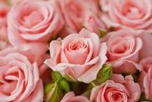 ~Roses of Dreams~ / Time for real ROSES..i♥it / by ღWillemijntje's BrocanteHoekjeღ