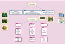 Κλιματικές Ζώνες / Ζώνες βλάστησης