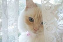 ~ℒacey's Dream~ / ღLace Lace LaceღNO PIN LIMIT!!