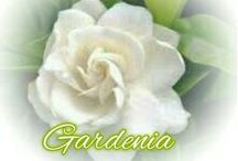 ~The Scent of Gardenia~ / *I love this flower plant de scent is lovely*NO PIN LIMIT!!