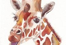 Giraffes!