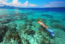 Snorkelling Coral Reefs / Snorkelling the most pristine, clear water in the Mentawai Islands is a dream come true! Beautiful colorful corals and fish plus amazing creatures you had never dreamed of... This board features creatures and corals seen in the Mentawai Islands