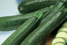 Zucchini & Summer Squash / green and yellow zucchini, crookneck, lemon, sunburst