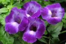 Flowers -- Perennials and Annuals