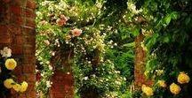Garden Tutorials / Gardening Tips and Tricks, Backyard tips, All about Gardening, How to Grow Plants, Gardening Cheat Sheets