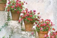 Kwiaty | Flowers