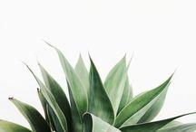green. / Plants.