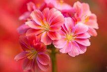 Flowers, nature's beauty / by marsha scott