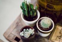 Gardens / by Lilian Britez