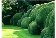 -> Gardens