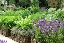 Vegetable garden inspirations