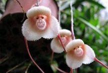Orkideat / Kauniita kukkia