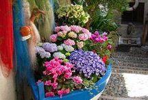 flores, frutas y plantas / by monica martinez