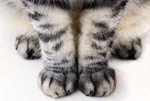 ANIMALS > / Animals, tiere, cute süß