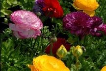 Flowers / by Lorna Walker