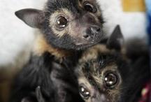 + Bats +