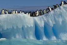Penguin obsessed