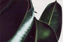GREEN / #green, #flower, #leavs, #zielony, #liście, #rośliny, #design
