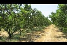 Farm Tours / Take a behind-the-scenes look into various farms in located in Northern California.