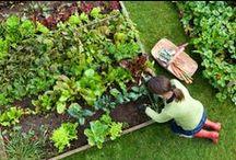 Garden Design and Cute Ideas! / Organic gardening, garden ideas, garden design, gardening, indoor garden, vertical garden, green wall, patio garden, small space garden