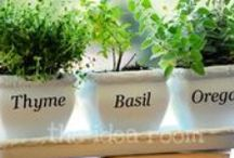 Herbs / How to grow and use herbs in cooking and medicine.