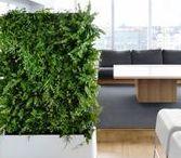 Vertical Garden / Small space and vertical gardening ideas.