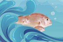 Balıkları Tanıyalım / by Kılıç Deniz