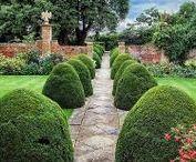 Сады, парки, растения