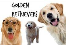 ☺︎ Golden Retrievers