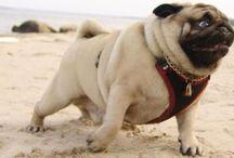 Pugs Not Drugs / Coisinhas mais fofas do mundo